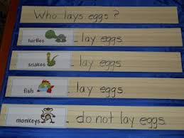 Animals That Lay Eggs Kindergarten Lessons Mother Baby