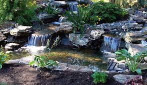 4 types of ponds for your backyard