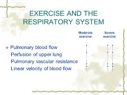 11 11 exercise and the respiratory system pulmonary blood flow perfusion of upper lung pulmonary vascular resistance linear velocity of blood flow