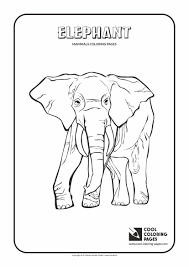 Small Picture Cool Coloring Pages Animals Coloring Pages