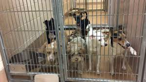 animal shelter pictures. Wonderful Pictures East Bay Animal Shelter Inundated By Strays After 42 Animals Dropped Off  During Winter Storm  Abc7newscom Throughout Animal Shelter Pictures I