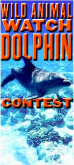 dolphin essay contest wild animal watch contest