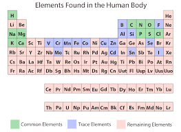 periodic table ilration of elements found in human body