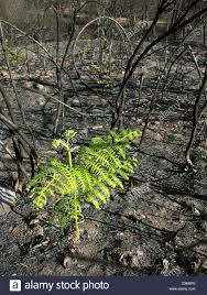 Environmental Issues Env Nature Fire Fern Hope Portugal High ...