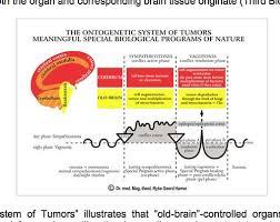 Dr Hamer Disease Chart Pdf