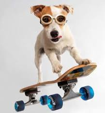 Image result for dogs doing tricks