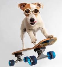 Image result for dogs doing tricks