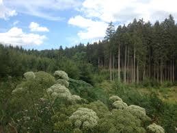 Wald Beautiful Wald With Wald Elegant Wald With Wald