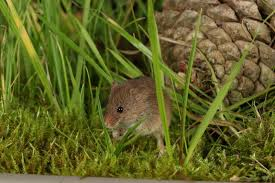 rodent proofing your garden helps