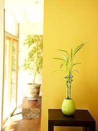 How To Create Good Feng Shui In Your Home  Dysco Moving Feng Shui In Your Home