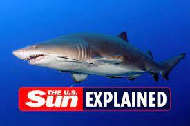 When is Shark Week 2021? - London News Time