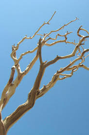 Manzanita Branches Sanded 21-38