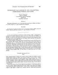 PDF) Petrejoides salvadorae sp. nov. (Coleoptera: Passalidae) from El  Salvador