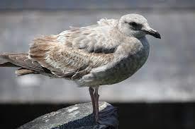 Seagull Marina - Free photo on Pixabay