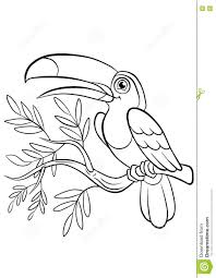 Small Picture Coloring Pages Birds Little Cute Toucan Stock Vector Image