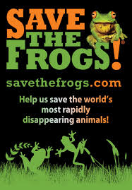 how to help save frogs save the frogs