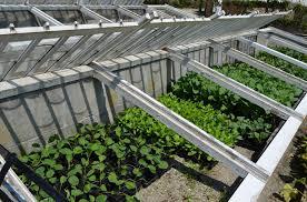 cold frame gardening. Perfect Gardening Coldframegardening Throughout Cold Frame Gardening T