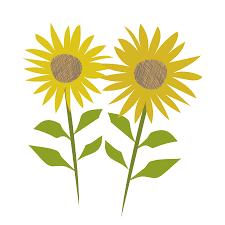 夏の花向日葵ヒマワリのイラスト 商用フリー無料のイラスト