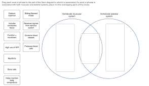 Parts Of A Venn Diagram Drag Each Word Or Phrase To The Part Of The Venn Diagram To