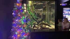 Watch The Tennessee Aquariums Electric Eel Light Up A