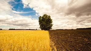 Практика по специальности Земельно имущественные отношения  Практика по специальности Земельно имущественные отношения земельные споры в суде