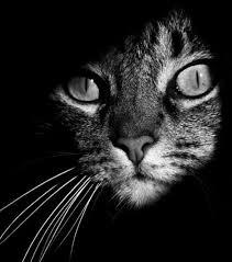 Résultats de recherche d'images pour «chat tapi dans l'ombre»