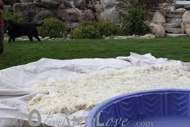 washing sheepskin rug cat urine