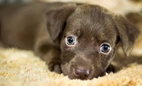 Quand et pourquoi donner des friandises à votre PETIT chien ?