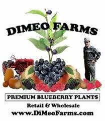 Soursop Tree  FastGrowingTreescomNon Gmo Fruit Trees For Sale