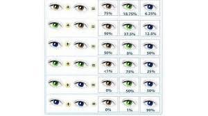Vypočítejte Si Barvu Očí Svého Dítěte Babywebcz