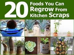 Kitchen Scrap Gardening 20 Foods You Can Regrow From Kitchen Scraps