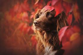 Image result for dogs in autumn