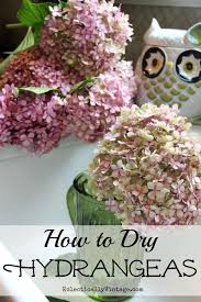 Drying Hydrangeas - follow these simple step by step directions to have  beautiful dried flowers all