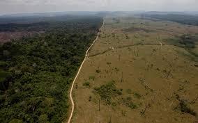 amazon rainforest deforestation. Simple Rainforest Brazil Deforestation With Amazon Rainforest Deforestation T