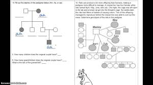 Pedigree Chart Worksheet With Answer Key Pedigree Practice Answers