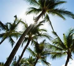 palm trees and blue sky nursery in tampa fl tree nursery tampa l93