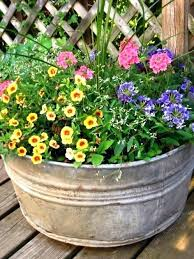 astonishing plants for outdoor pots full sun full sun container garden ideas amazing potted flowers that thrive in full sun the best ideas flower for potted