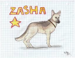 zasha by starrunner808