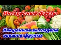 Реферат по теме блюда из овощей Как раньше выглядели современные овощи и фрукты Интересные факты
