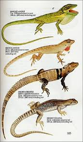 Reptiles Of North America A Guide To Field Identification
