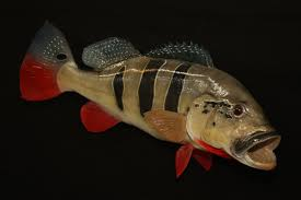 quality fish replicas from your photo