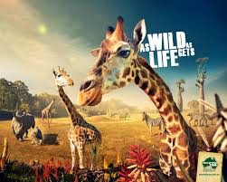 zoo wallpaper. Perfect Zoo 1280x1024 Get Involved With Wildlife Rescue At Australia Zoo Inside Wallpaper