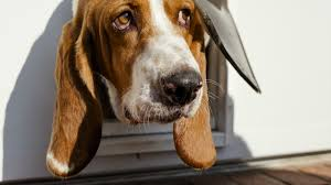 Your doggie door is probably wasting energy — but you can fix that ...