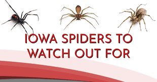 Free Spider Identification Chart Infographic Common Spiders Found In Iowa Area