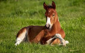 beautiful baby horses wallpaper. Delighful Horses Image Beautiful Horse Wallpapers And Stock Photos  Intended Baby Horses Wallpaper F