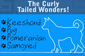 dog breeds that have curly tails