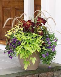 Nice looking planter arrangement. Summer Serenade Annual Collection - 6  plants, $55.45