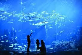 Bildresultat för the lost chambers aquarium dubai - förenade arabemiraten