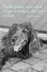 Spruchbild Mit York Trauer Tod Sprüche Hunde Irish Setters