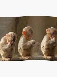 Three Cute Baby Monkeys Poster